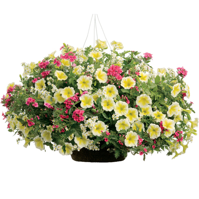 10 Inch Hanging Basket Combinations