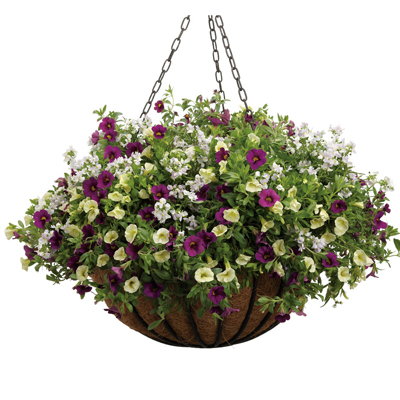 10 Inch Cocoa Hanging Basket Combinations