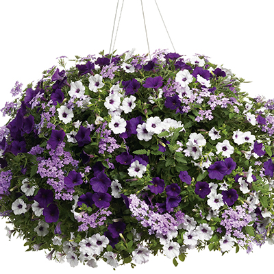 12 Inch Hanging Basket Combinations
