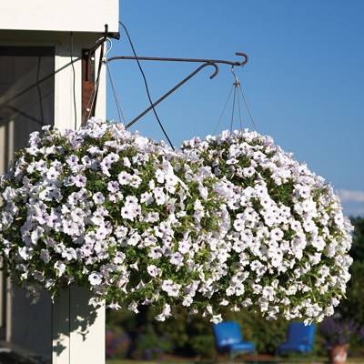 10 Inch Monoculture Hanging Baskets