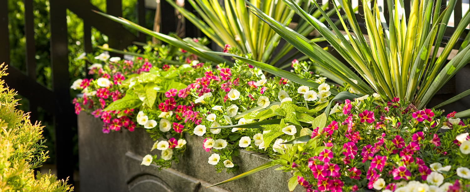 We offer a wide variety of plants